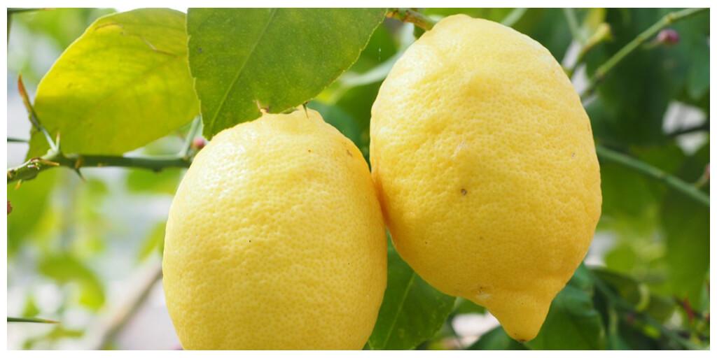 Lo que quizá no sabías del limón